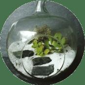 Atelier Terrarium Marie Cultive