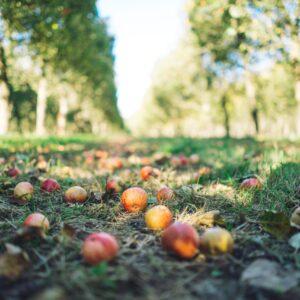 verger-kerné-automne