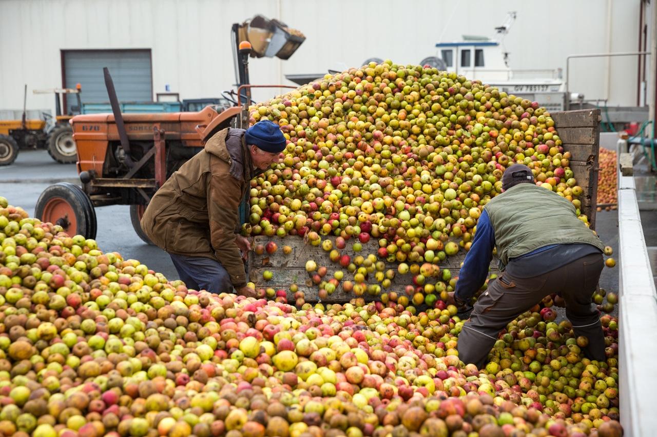 réception-des-pommes-kerné